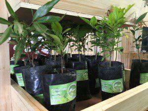 Contribuir con el ambiente es parte de la Responsabilidad Social de la empresa.