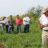 El gerente de crédito agropecuario de Banpro Grupo Promerica, Roger Incer acompañó a los productores en toda la jornada de visitas.